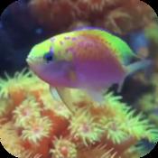 Fish Tank Free 金魚缸