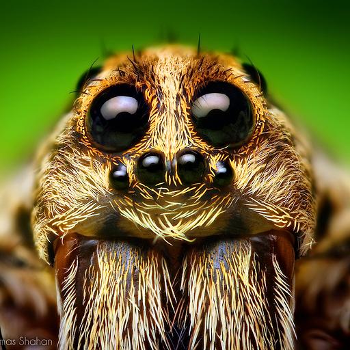 Bugs! - Incredible Macro Photography by Thomas Shahan