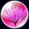 Zepi:Spring Icon