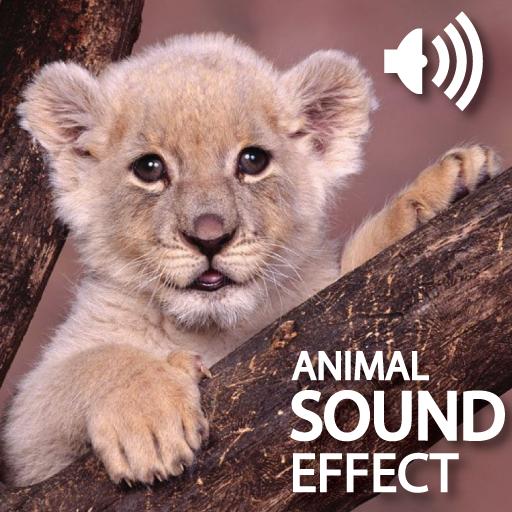 Amazing Funny Sound Effect