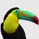 AnimalsCall Icon