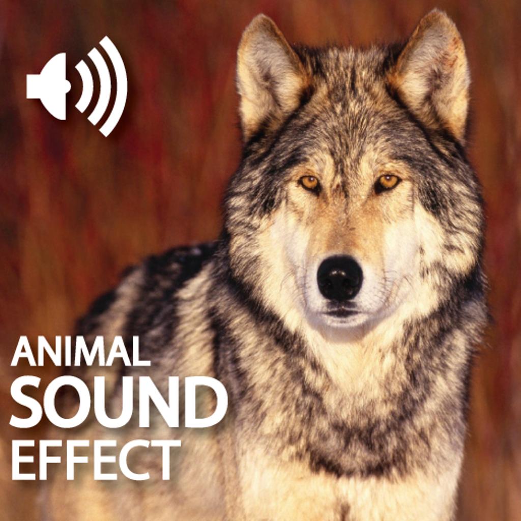 Amazing Sounds Animals