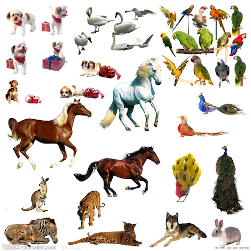 Animal ABC Free