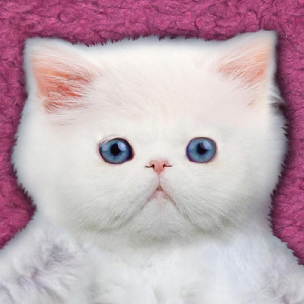 Kitten Calculator HD