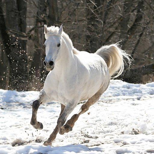 Horse Wallpaper Lite