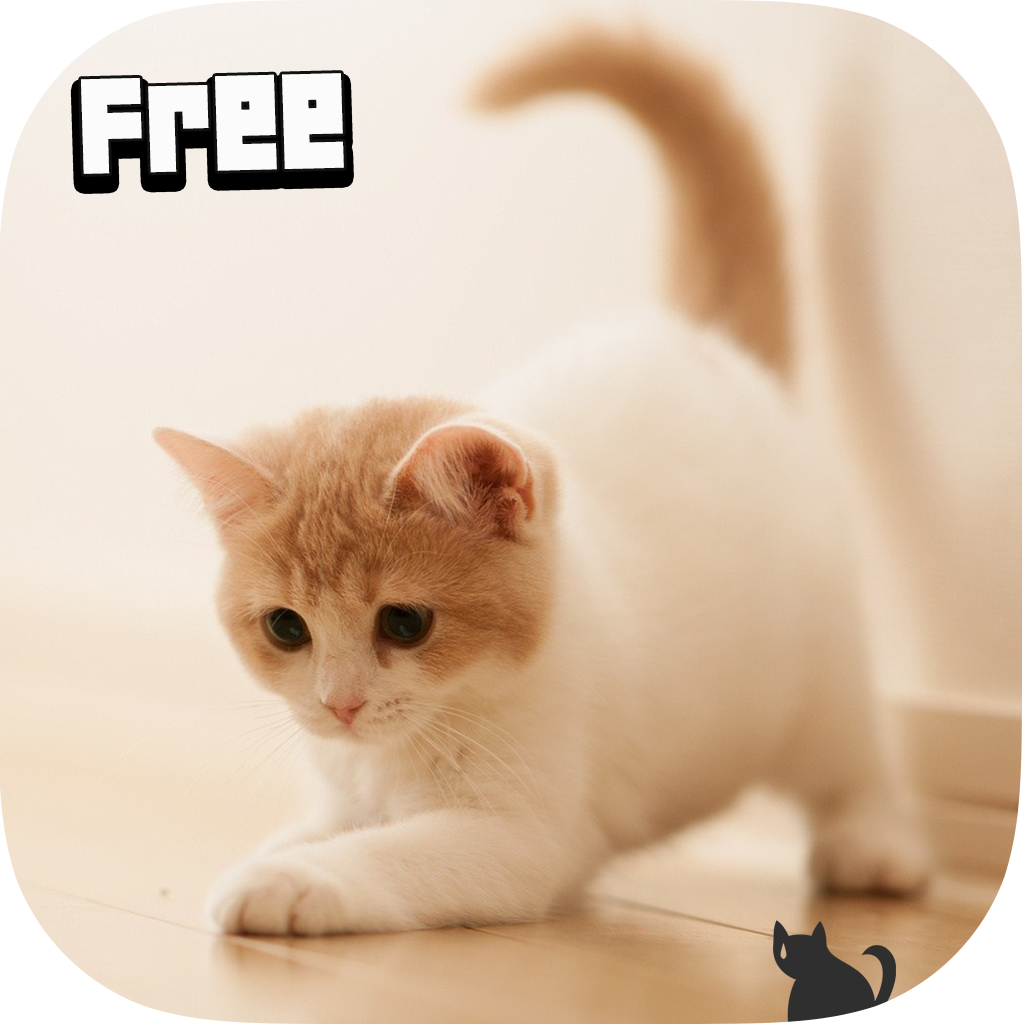Cute Cat Wallpaper Hd Apps On Google Play Free Android