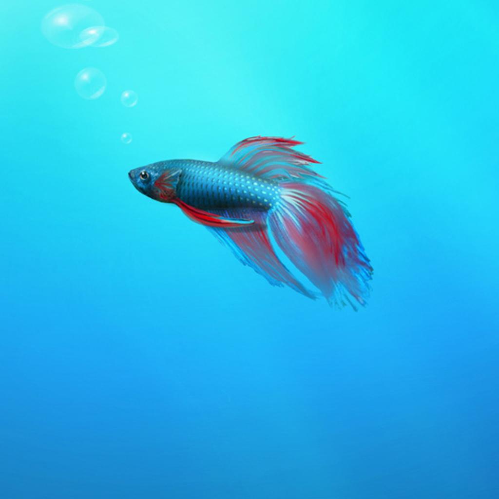 Hintergrundbilder Tier Für Ihren Bildschirm In HD Bei