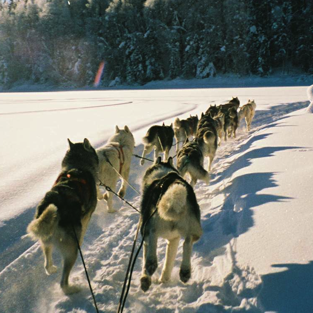 News For Iditarod