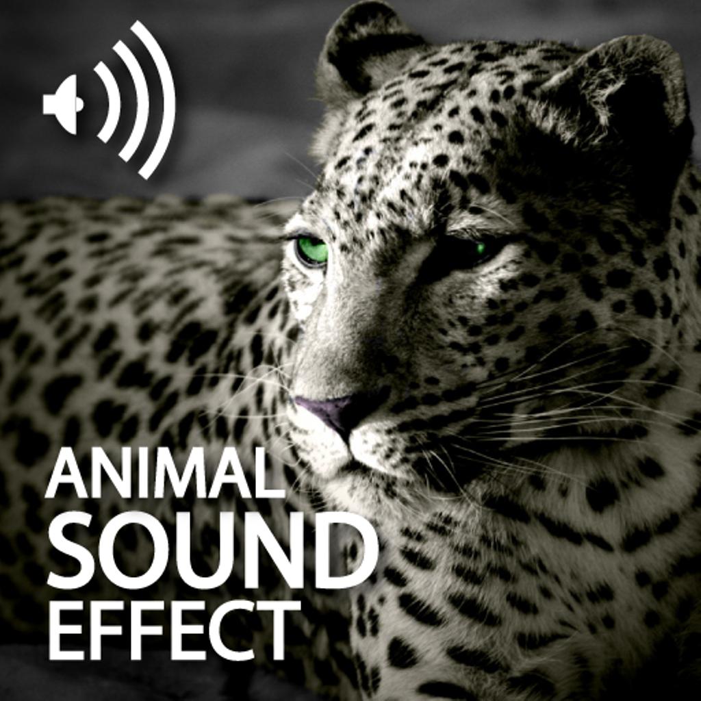 Animal Sounds Effects Par Wei Ping YU