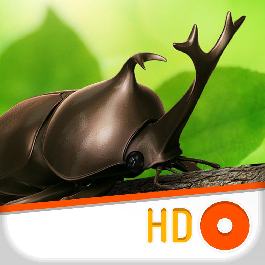 Dynastid Beetle