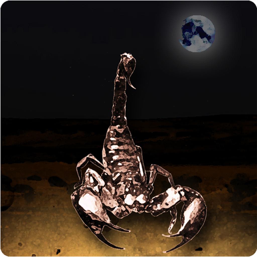 Scorpion Night